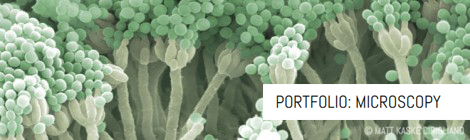 Portfolio: Microscopy