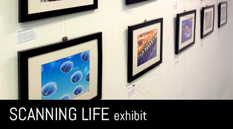 Scanning Life Exhibit